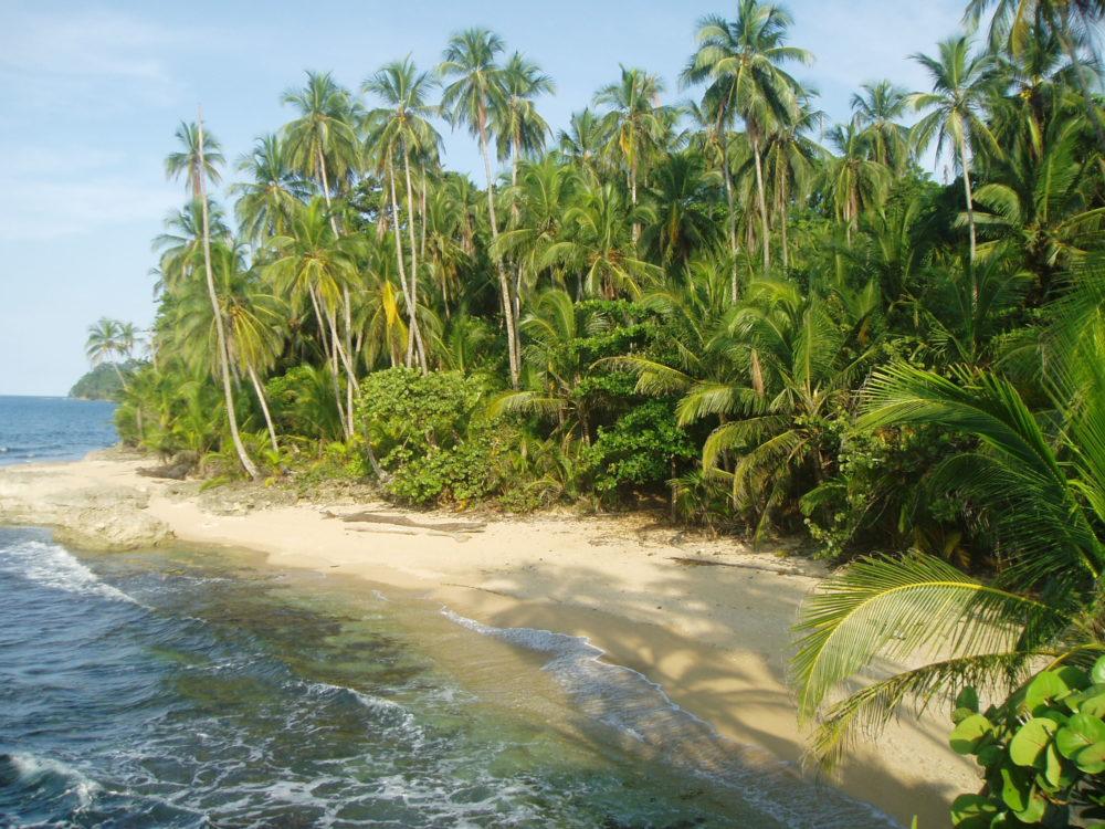 Caribbean beach jungle
