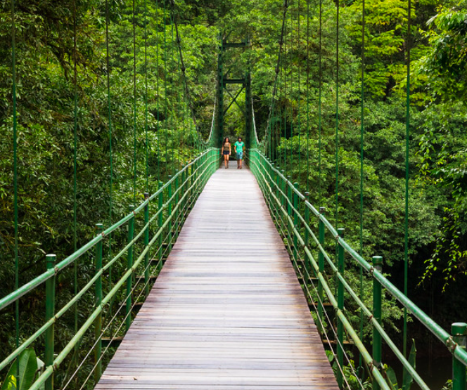 La Selva Bridge Sarapiqui