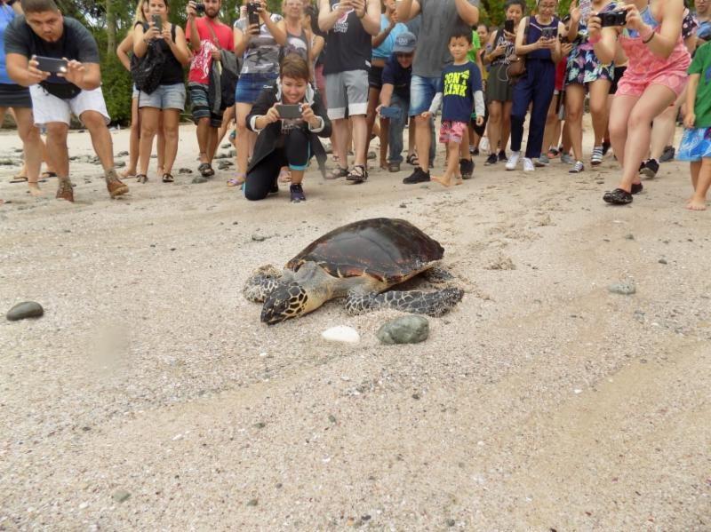 hawksbill-turtle-CREMA