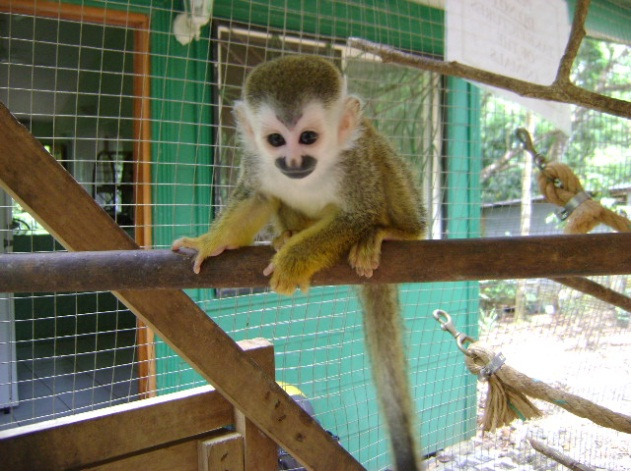 kstr-squirrel-monkey