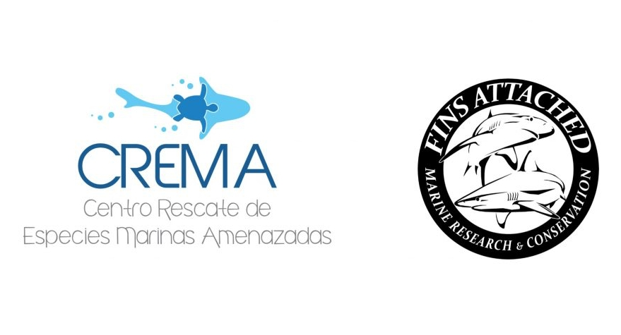 shark protection groups in Costa Rica