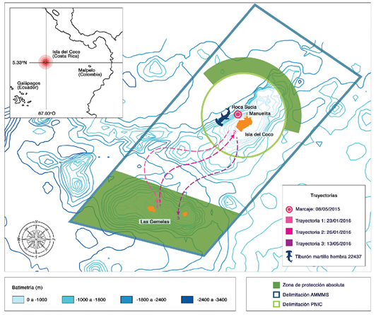 Hammerhead Shark Map
